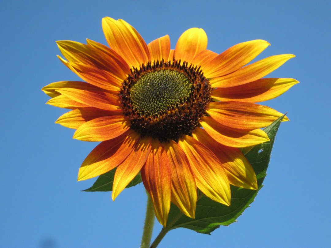 bloom-close-up-flora-70333.jpg