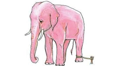 elephant_tied_with_rope